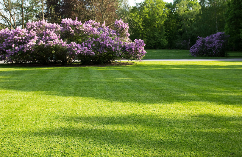 How to Grow the Perfect Lawn: From the Experts